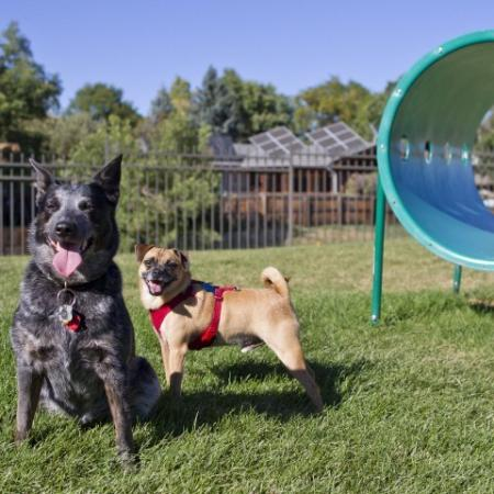 Residents and their Pets at the Bark Park | Denver Apt | Summitt Ridge