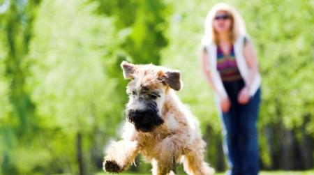 Pet Friendly Apartment Community | Walden Pond and the Gables