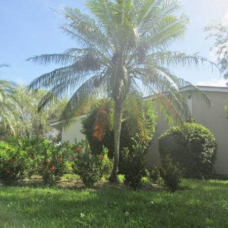 Clubside Apartment Homes, exterior, grass, foliage, palm trees, building