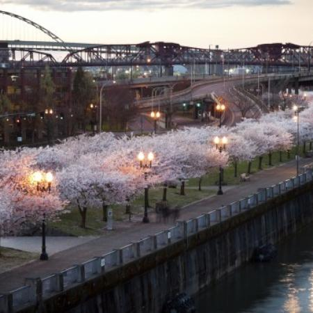 Apartments In Portland Oregon | The Addy 1