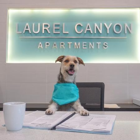 Dog In Leasing Office | Apartment in San Antonio, TX | Laurel Canyon Apartments
