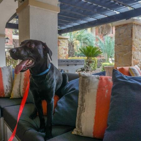 Pet Friendly Apartment Community | San Miguel