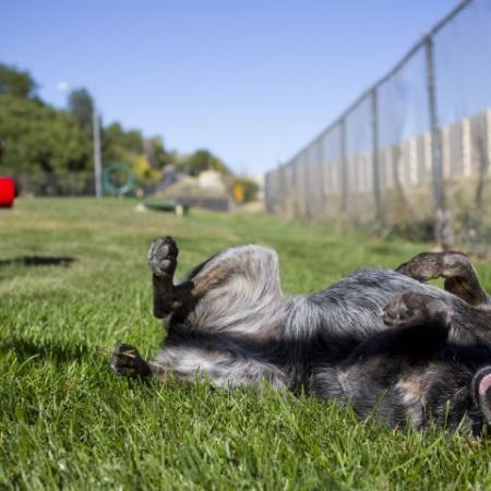 Residents Playing with their Pets | Denver Apartment | Summitt Ridge