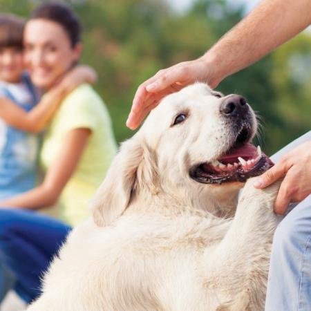 Pet-friendly with fenced pet park and washing zone