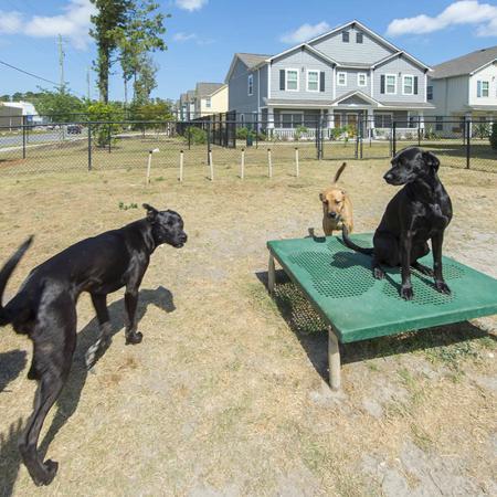 dog park aspire 349 apartments at UNCW