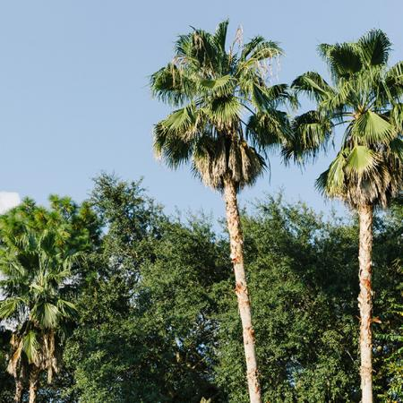 1800 The Ivy, exterior, palm trees, other trees
