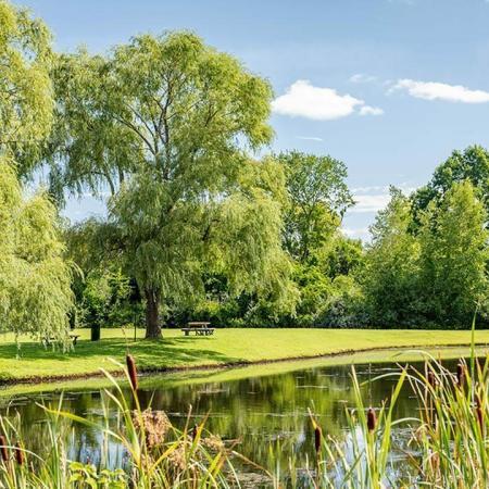 Views of pond