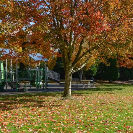 Child's playground with trees in fall colors