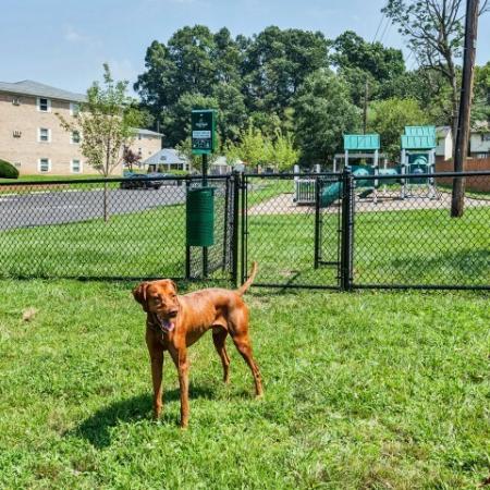 Community Bark Park | Allentown Apartments | Lehigh Square