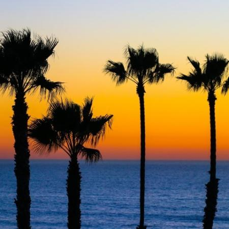 Sunset with 4 Palm Trees