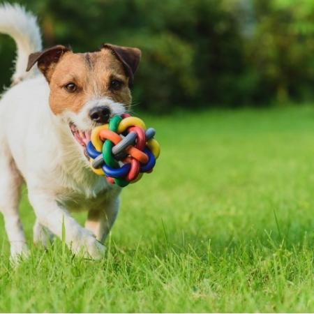Dog playing in field with ball