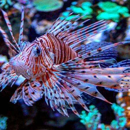 Bright Colored Fish in an Aquarium
