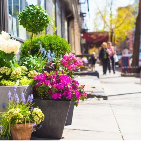 Flowers along NYC Street