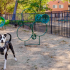 Your Dog will Love the Bark Park