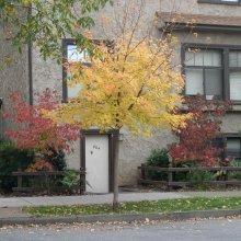 804-B Chestnut St.