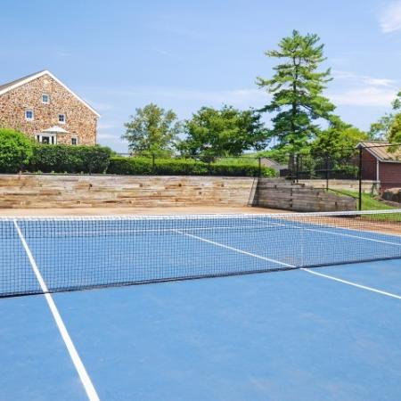 Blue tennis court surrounded by pine trees.