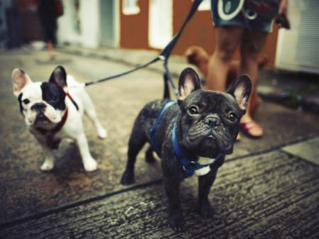Pet Friendly | Cleveland Ohio Apartments for Rent | The Standard