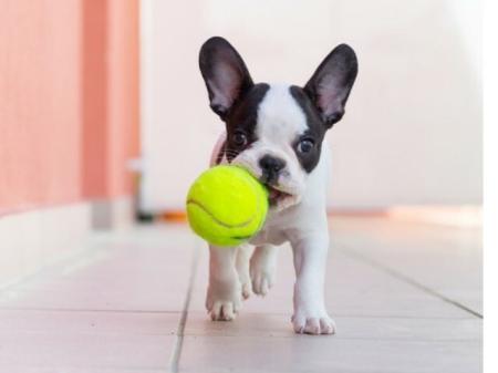 Puppy | Meridia Lafayette Village