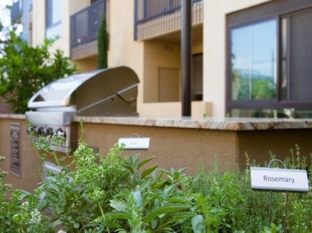 BBQ Grills and Herbs at Terrena Apartment Homes in Northridge, CA