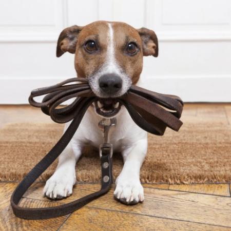 Stock dog photo