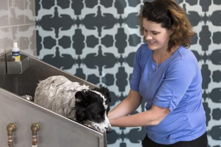 Pet spa with two washing stations and two drying stations at Talia Luxury Apartments in Marlborough, MA