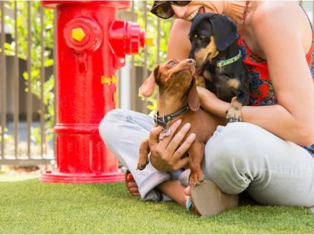 Valentia La Habra, CA - We are pet friendly