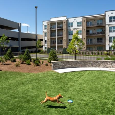 Large bark park at Mave Apartments in Stoneham, MA