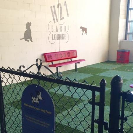 Pet friendly apartments in downtown Hartford