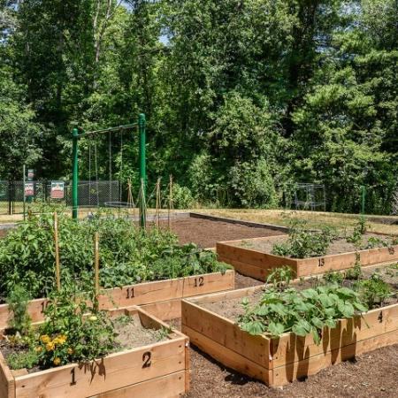 Apartment community garden plots | Residences at Westborough