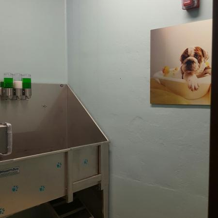 Pet Washing Station   2 Bedroom Apartments in Menomonee Falls   The Junction