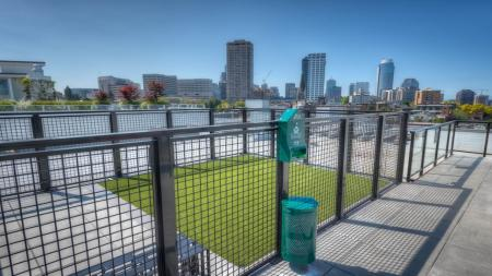 Pet-Friendly Apartments in Seattle, WA | Modera Capitol Hill
