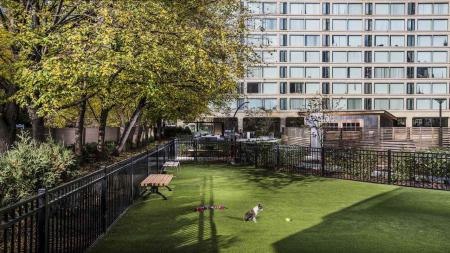 Ground-Level Dog Park | The View at Waterfront